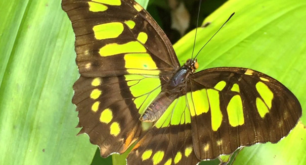 200-million-year-old butterflies appeared before flowers, study says