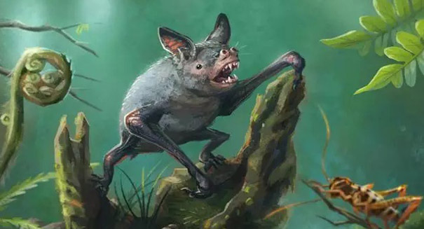 Ancient burrowing bat uncovered in New Zealand