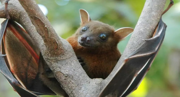 Bats use gene from ancient Ebola-like virus, study says
