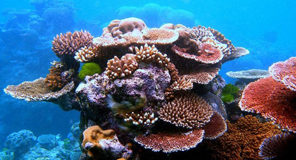Corals in deeper waters are stressed too, study says