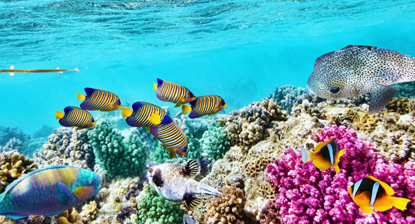 Corals on Great Barrier Reef irreparably damaged by global warming