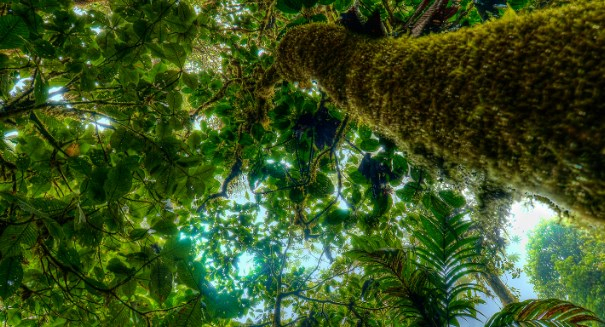Costa Rica is moving toward carbon neutrality