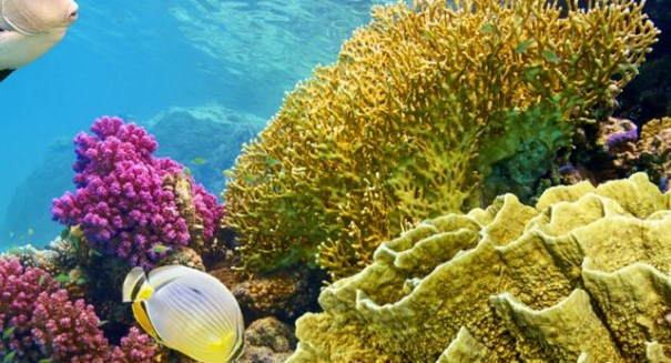 Eliminating rats could help coral reefs, study says