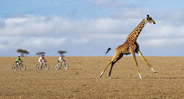 Epic safaris outside of Africa