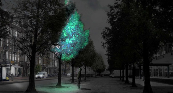 Glowing plants could be a future alternative to electrical lights