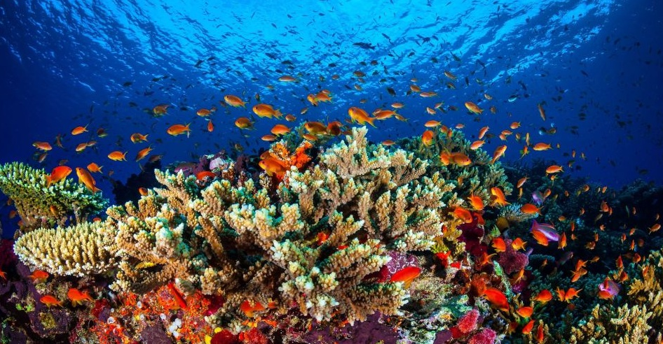 Australian reef loss could be worse than previously predicted, study reports
