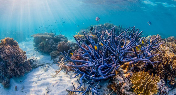 Great Barrier Reef may be on its sixth near-death experience, study reports