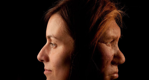 Human prehistoric ancestors mated with each other, study says