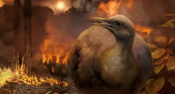 Massive asteroid impact likely rewrote bird history