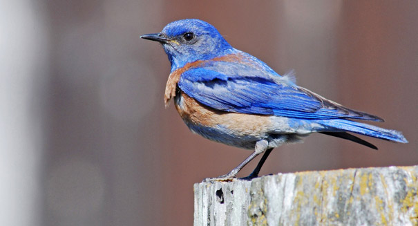 Noise pollution is causing birds extreme amounts of stress