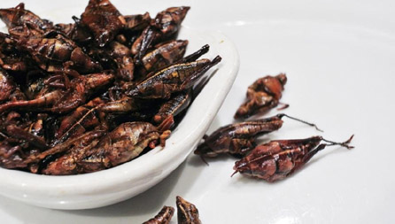 Places in the U.S. to Try Bug-Based Delicacies