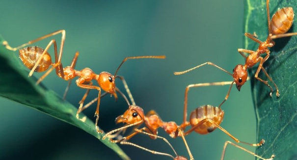 Researchers analyze conditions that facilitate cooperation in nature