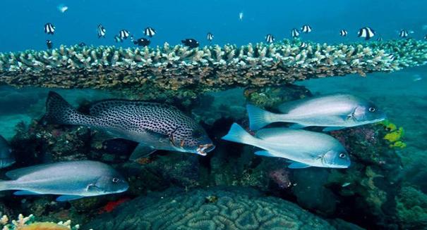 Researchers discover over 100 unknown aquatic species around Bermuda