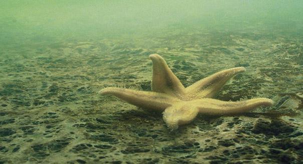 Scientists discover 'Dead Zone' size of Florida in the Arabian Sea