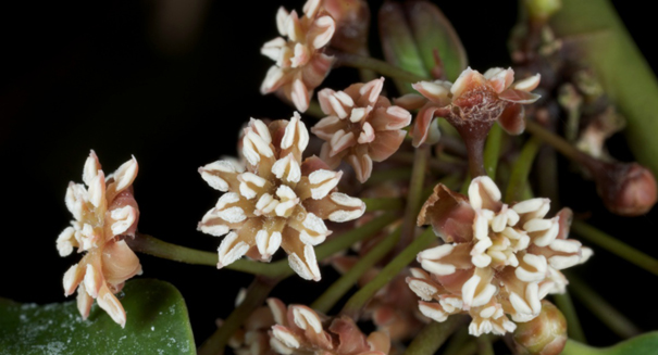 Small genomes helped flowering plants expand across Earth