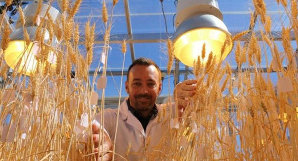 'Speed breeding' could boost future crop production