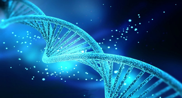 Study examines how jumping genes cause disease and drive evolution