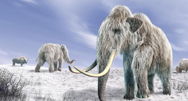 Study links humans to large-mammal extinctions