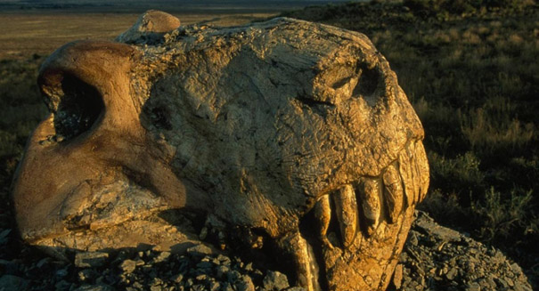 Study reveals new clues about Great Dying, Earth's largest mass extinction