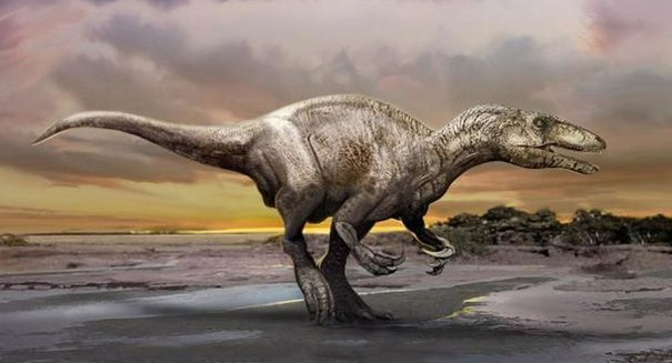 Turkey-sized dinosaur roamed Australia 113 million years ago