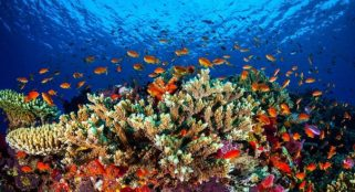 U.S. coral reefs heading for extinction by mid-century