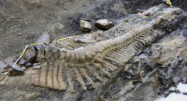 Colorado bike trail planner finds dinosaur bones