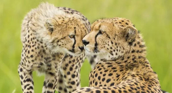 Wildlife provides a context for teaching empathy