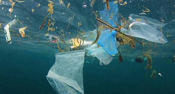 Young scientist invents robot to hunt ocean plastic