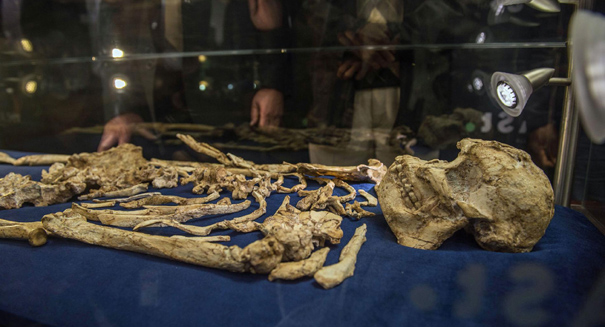 Scientists unveil rare skeleton of 3.6-million-year-old human ancestor