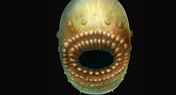 Is this ancient, bag-like sea creature our earliest ancestor?