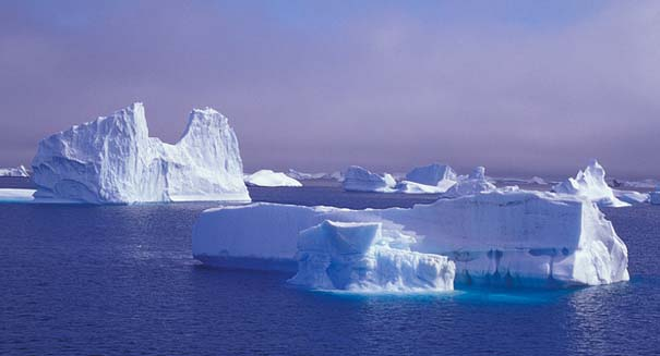 Antarctica was once covered in forest, study reports