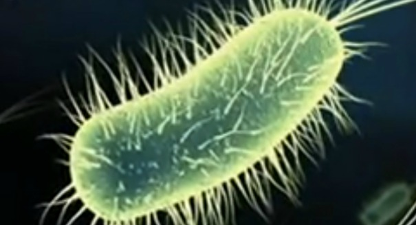Bacteria are able to shape-shift, resist antibiotics in space