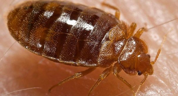 Plague-infected fleas found in Arizona