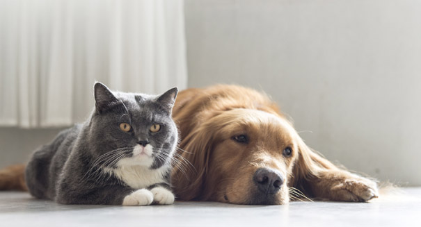 Dogs are smarter than cats, study reports