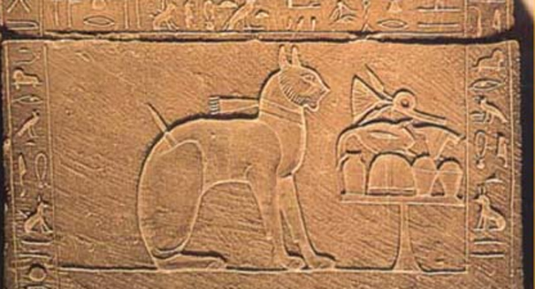 Cats first domesticated in ancient Egypt, Near East, genetic study shows