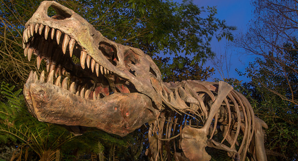 CT scans of tyrannosaur skull hold clues to predator's evolution