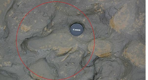 Scientists uncover some of the first modern footsteps