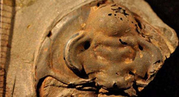 Oldest-ever fossilized eye discovered