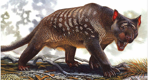 New marsupial lion species uncovered in Australia