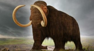 Peter Thiel invested $100,000 to resurrect woolly mammoth