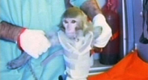 PETA sues for 'selfie' copyright infringement on behalf on monkey