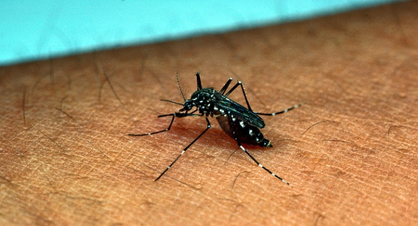 EPA approves genetically-modified mosquitoes