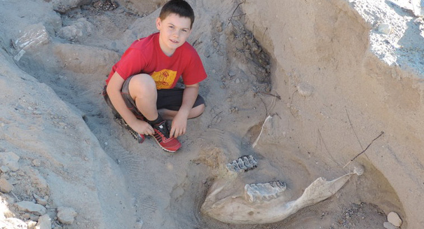 Nine-year-old stumbles on million-year-old stegomastodon