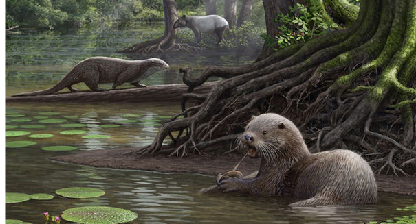 Ancient otter found to be the size of a wolf