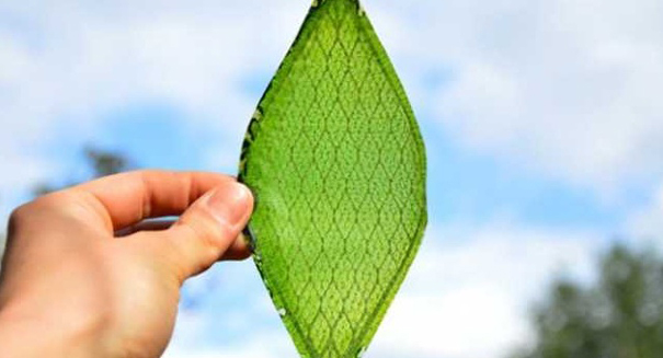 Scientists develop part artificially and living leaf to generate power