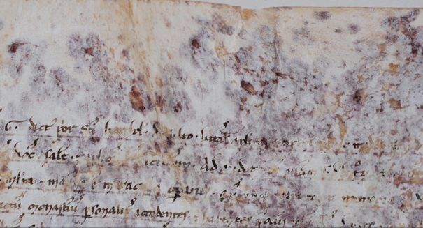 Mystery behind 800-year-old scroll's purple spots finally solved