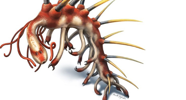 Ancient, spine-covered sea worm could shed light on Cambrian explosion