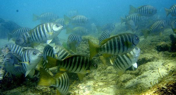 Warming oceans could kill 80 percent of Pacific Islands fish